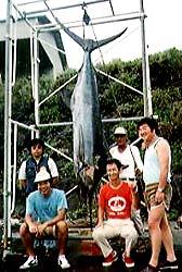 発足当時三宅島で行われた東京ビルフィッシュトーナメント